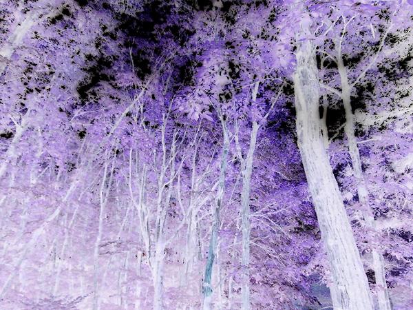 kyofusanso03.jpg